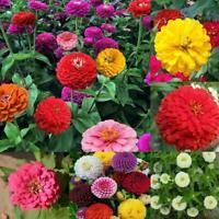 200 MIXED COLORS CALIFORNIA GIANT ZINNIA Elegans Flower Seeds Best