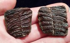 Beautiful Natural Fern Fossil Frond Pair Shale 22g. Wonderful Color Missouri USA