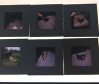 1970S LOT OF 6 PHOTO SLIDES OF DOGS