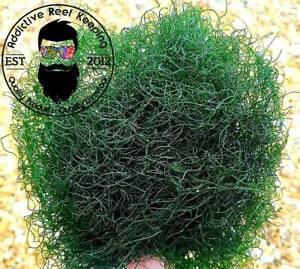 ***SALE***1 cup Chaetomorpha Macro Algae Chaeto nutrient Export Free shipping !