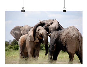 ELEPHANT CANVAS PICTURE POSTER PRINT WALL ART UNFRAMED A431