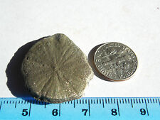 30mm  natural  IRON PYRITE SUN / DOLLAR from Sparta;A+:Fossils;Pendant Size #9