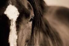HORSE ART PRINT Dark Eyes Lisa Dearing