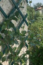 2 X GREEN EXPANDING PVC GARDEN TRELLIS  5ftx1.3ft / 1.5M X 40CM
