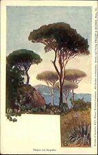 Rapallo Liguria Italia cartolina color per 1900 pini ALBERO ALBERI TREE botanica