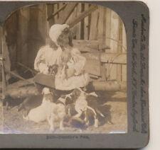 Pretty Little Girl & her pet puppies & Bunnies Keystone Stereoview c1900