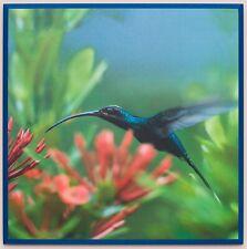 Framed Hummingbird Photograph Laminated on Wood Home Decor Modern Look