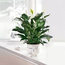 FTD® Comfort Planter CPP