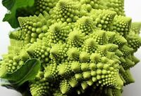 Broccoli, Romanesco Broccoli Seeds 50+ SEEDS NON-GMO healthy USA