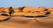 Desert Sand Dune Palm Tree High Quality WALL PRINT PREMIUM LARGE POSTER  91X61CM