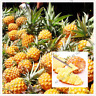100 PCS Seeds Fruit Vegetable Plants Pineapple Flores Sweet Juicy Bonsai Garden