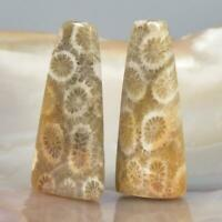 Loose Semi Precious Size 25x12x4 MM Agatized Pair Fossilized Coral AG-12643 Designer Natural Fossil Coral Earring Pair Cabochon Handmade