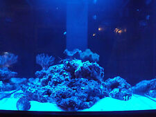 "96"" Moon Light Moonlight Shimmer 30 LED Fish Aquarium Reef Fresh Power Supply"