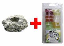 Dragon Jellyfood Mix 20er + Jellyfood Rock Granite - Beetle Jelly, Fruitjelly