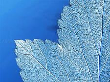 BLUE LEAVES ABSTRACT PLANT PHOTO ART PRINT POSTER PICTURE BMP787A