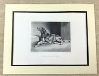 Sir Edwin Landseer Antique Engraving Waiting For The Countess Pedigree Dog 1880