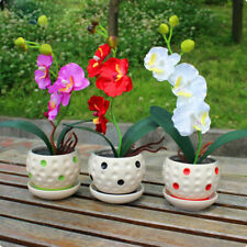 200Pcs Mixed Phalaenopsis Orchid Seeds 22 Types Flower Senior Ornamental Seeds