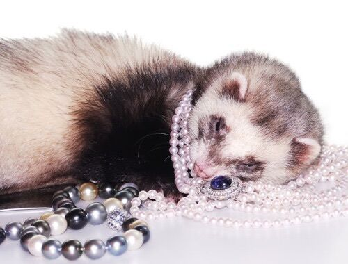 Ferret and Magpie Vintage Jewelry