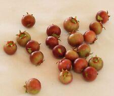 Ugni molinae, Eugenia, murta murtilla, Chilean Guava Strawberry Uñi, 15 semillas