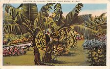 WELAKA FLORIDA POSTMARK BEAUTIFUL BANANA TREE BEARING FRUIT POSTCARD c1928