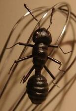Ant Magnets - Set of 4 - Loads of Fun