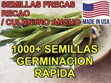 1000+ Semillas de Recao, Culantro Ancho, Alcapate | Alta Calidad | Natural