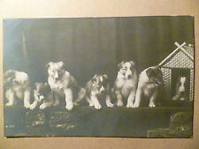 1912 ANIMAL POSTCARD- SEVEN DOGS PICTURE POSTCARD(Rotary Photo, London)