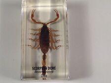 scorpion doré chine empaillée / trophée / taxidermie