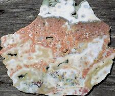 PERSONAL COLLECTION AAA OCEAN JASPER POLISHED SLAB SLICE DISPLAY CAB ROUGH 6937