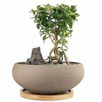 Round Unglazed Ceramic Succulent Plants Bonsai Pot with Coarse Ceramic Bamboo Tr