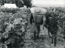 PHOTO ORIGINALE : VENDANGE VIGNES SEAU GRAPPE RAISIN VIN tirage argentique 1970