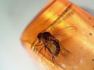 Miocene Dominican Amber Fossil With Dolichopodid  CS14 0.32g