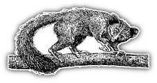 Aye-aye Animal Hand Drawn Car Bumper Sticker Decal 6'' x 3''