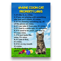MAINE COON CAT Property Laws Fridge Magnet No 3 Funny