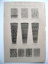 stampa antica old print SEZIONE MICROSCOPIO STRUTTURA LEGNO ALBERO Londra 1862