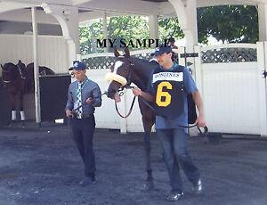 STEPHANIE'S KITTEN 8 by 10 PHOTO 2014 Horse Race BELMONT PARK Breeders Cup #7