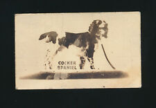 1948 Topps Magic (American Dogs) -#10 Cocker Spaniel