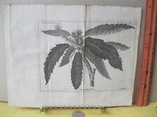 VIntage Print,CHESNUT Chestnut TREE,Spectacle de la Nature,1736,Plate 30