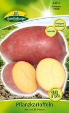 """Saatkartoffeln Pflanzkartoffeln """"Rosara"""" Quedlinburger"""