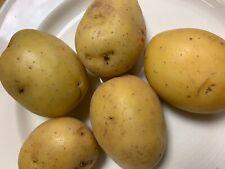 6 Yukon Gold seed potatoes, Usa grown, homestead harvest garden, prepared family