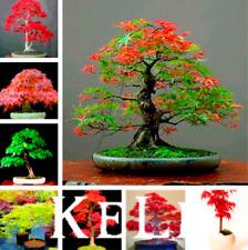 11 Kinds Mixed Japanese Red Maple Bonsai Tree Garden Mini Plants 20 Pcs Seeds D