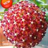 100 Pcs Seeds Hoya Flores Potted Flowers Bonsai Hoya Plants Orchid Home Garden V