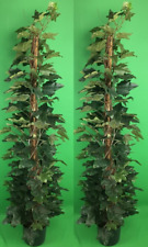 "2 ARTIFICIAL 5' 6"" SILK PALM TREE PLANT POT ARRANGEMENT IVY LEAF BAMBOO"