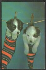 The Monday Wash 2 Adorable Puppies in Socks Hanging From the Wash Line postcard