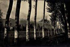 Forte dei Marmi Italien Italia Toskana AK ~1930 Dintorni Baum Allee Wald Berge