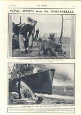 1915 Naval Scenes Dardanelles Pet Pig Narrow Escape Inflexible Picket Boat