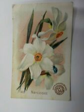 Arm & Hammer Church Co Beautiful Flowers Victorian Trade Card Narcissus # 40