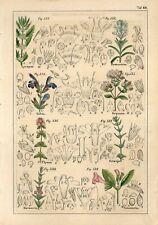 1842 ROSEMARY SAGE SAVORY PLANTS FLOWERS Antique Hand Coloured Print Petermann