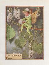 Flower Fairies: THE POPLAR FAIRY Vintage Print c1930 by Cicely Mary Barker Art
