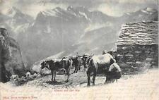 ABEND AUF DER ALP ADLLBODEN TO INTERLAKEN SWITZERLAND ANIMALS POSTCARD 1902
